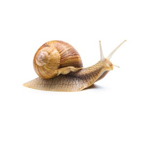 Śluz ślimaka